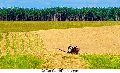 Harvesting of rye on the field