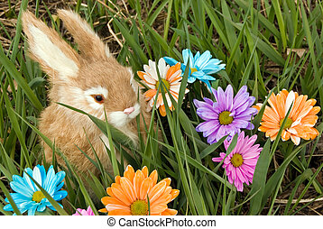 In The Meadow - Bunny in tall grass with daisies.