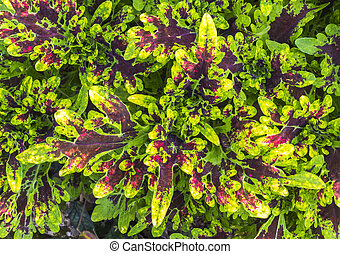 Colorful leaf - Closeup colorful and bright of green leaf