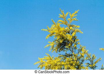 藍色, 葉子, 天空, 松樹