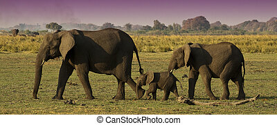 Elephant Family - Three Elephants walking