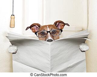 dog toilet - dog sitting on toilet and reading magazine