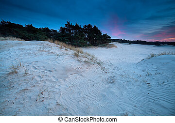 purple sunset over sand dunes, Nunspeet, Gelderland,...