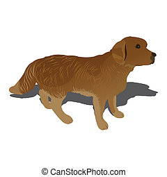 Vector illustration of dog, isolated on white background