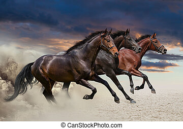 Three horses running at a gallop - Horses running at a...