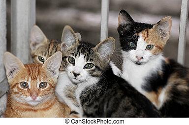 cat looking at the camera close up shot