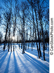 Winter Forest - A picturesque winter forest with an early...
