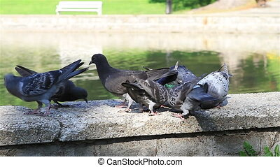 Pigeons on the Fountain closeup - Pigeons on the Fountain in...