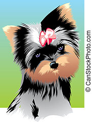 nice yorkie - illustrated nice yorkie on the colored...