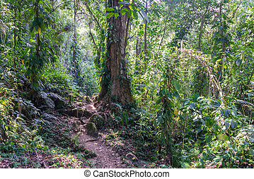 Jungle View - View of the jungle near the Sierra Nevada de...
