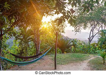 Hammocks at Sunset - Hammocks at sunset in a beautiful lush...