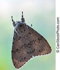 Motyl, ćmy, lustro