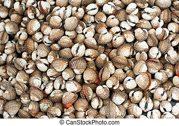 Fresh cockles clams for sale at asian seafood market