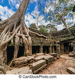 Ta Prohm temple Angkor Wat Cambodia - Ancient Khmer...
