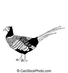 Pheasant illustration