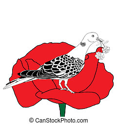 Dove on poppy