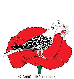 Dove on poppy