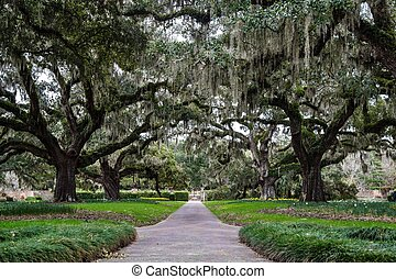 Carolina Spring - Century old Live Oaks draped in Spanish...