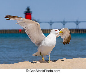Flapping Gull and LIghthouse