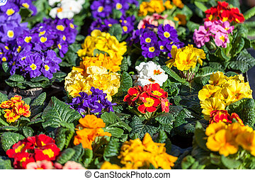 Background of colourful vivid summer flowers - Botanical or...