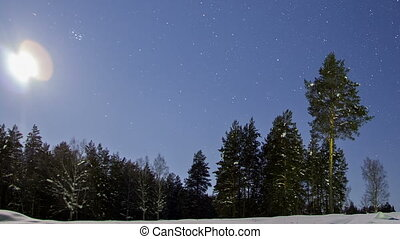Trees in the night sky. Time Lapse