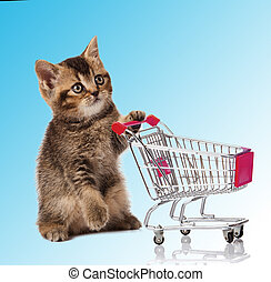 british cat with shopping cart