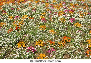 summer flower in the garden