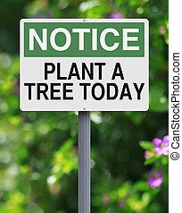 植物, 木, 今日