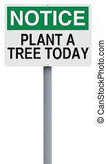 植物, 樹, 今天