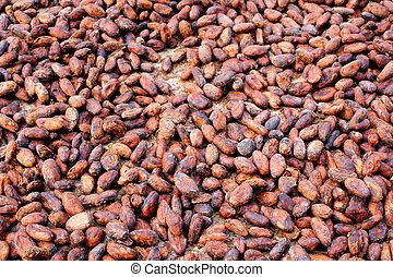 Kakaobohnen - fermentierte, gewaschene und getrocknete...