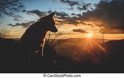 Dog watching a sunset