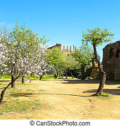 Almond tree and Temple of Juno Valley of the Temples in...