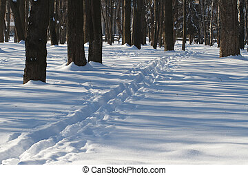 Narrow path in the snowy forest. Winter.