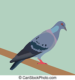 Pigeon - Vector and illustration of pigeon