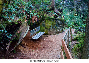 Bench on Path, Snoqualmie Forest - A bench to rest while...