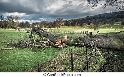 Fallen Tree Damage - Large fallen tree smashed through iron...