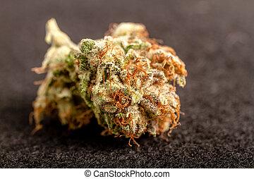 Marijuana Buds - Close up of medicinal marijuana buds on...