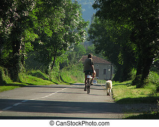 Cycling with dog - Close to Pyrenees, in South France,...
