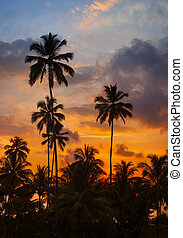 Tropical palm trees against the sky at sunset