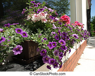 Flowers on windowsill - Pot with colorful flowers on the...