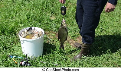 fishing catch weight - man measured the weight of the fish...