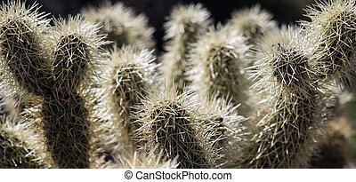 Macro shot of spikey catus in Arizona