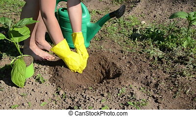 plant seedling - girl digs a small hole in the soil poured...