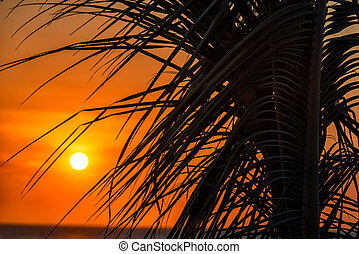 Palm Tree Sunset - Stunning orange sunset against the...