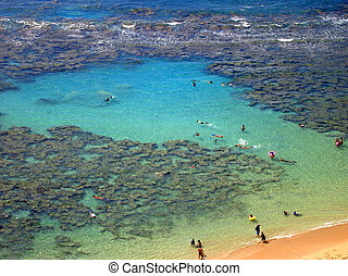 Snorkelers and Families swimming around the coral at Hanauma...