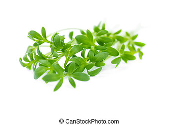 The watercress isolated on white - The watercress isolated...