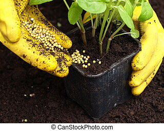 Fertilization, closeup - Gardener putting a fertilizer in...