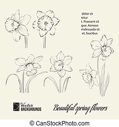 Spring flower set. Vector illustration.