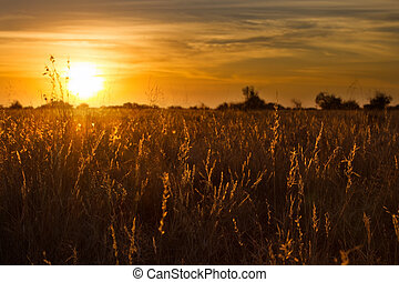 Golden sunset through dry kalahari grass with lovely orange and yellow colours