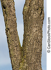 bark on a tree in winter. age, structure, background